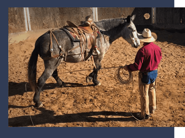 ground work with horse